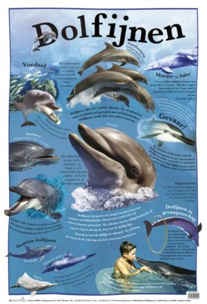 Poster: Dolfijnen - 1 stuk PROMO!-777