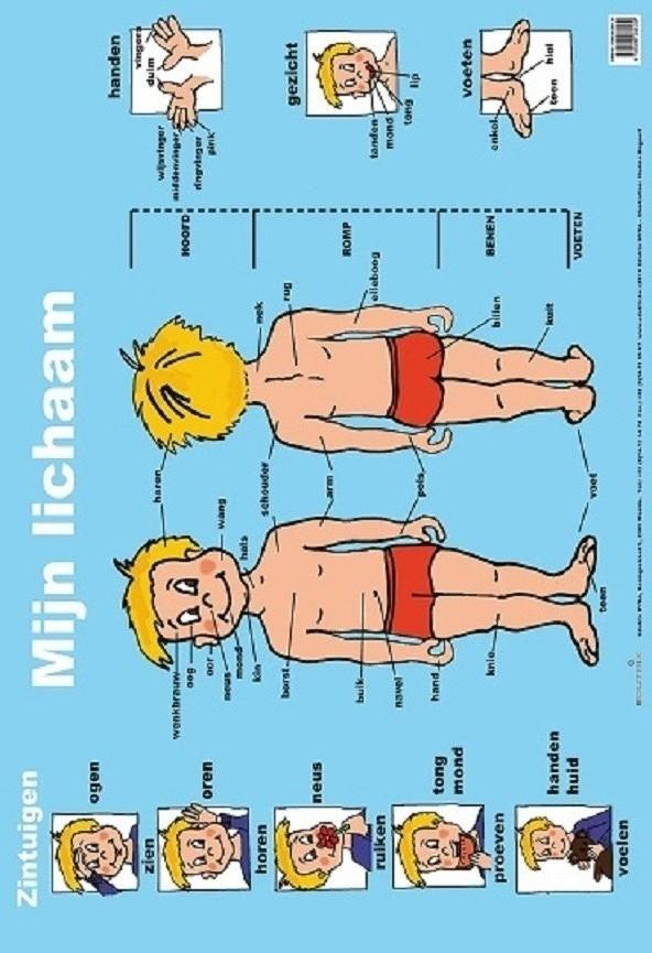 Poster: Mijn lichaam - 1 stuk-765