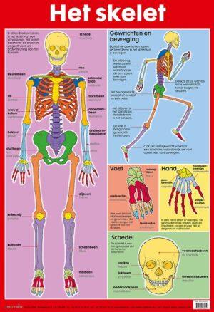 Poster: Het skelet - 1 stuk-1030