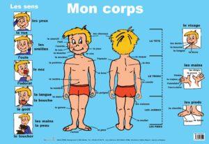 Poster: Mon corps - 1 stuk-810